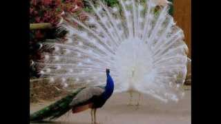 mukhya maa madwarani mandir (pahad uper) korba chhattisgarh
