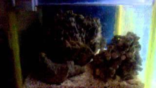 90 Gallon Marine Aquarium Setup Diy