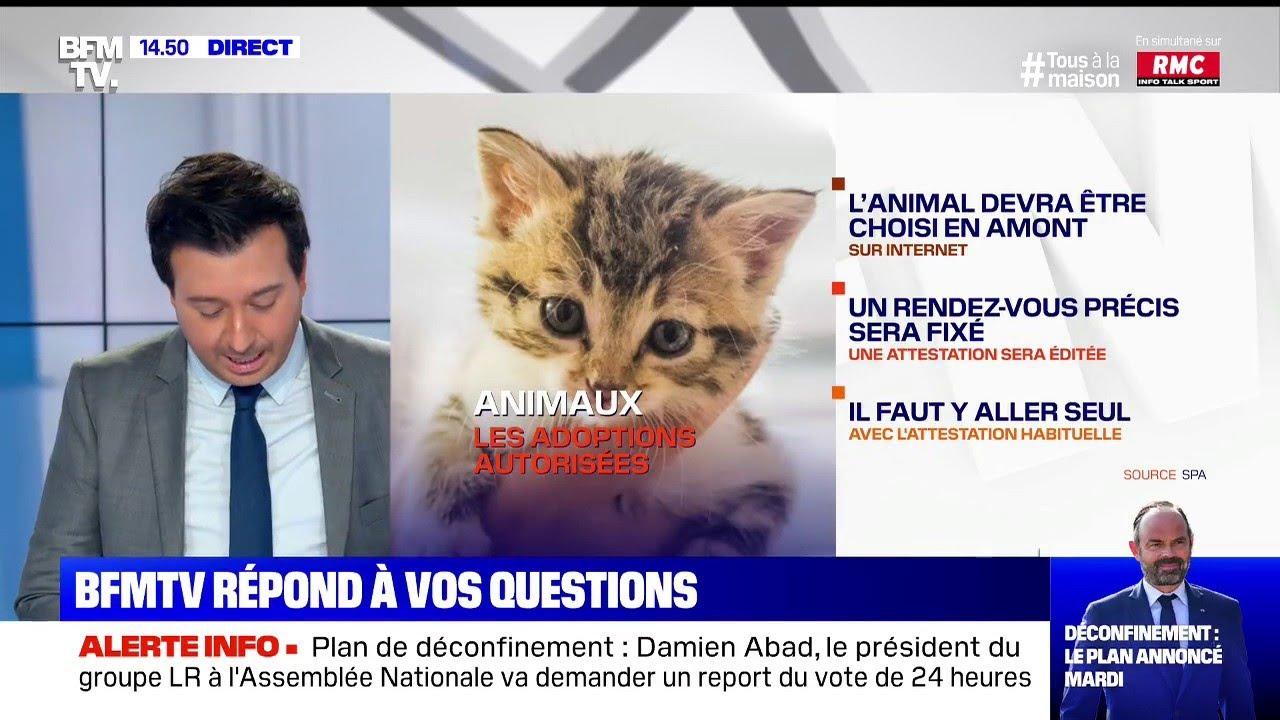 Puis-je aller récupérer un chat dans un refuge ?