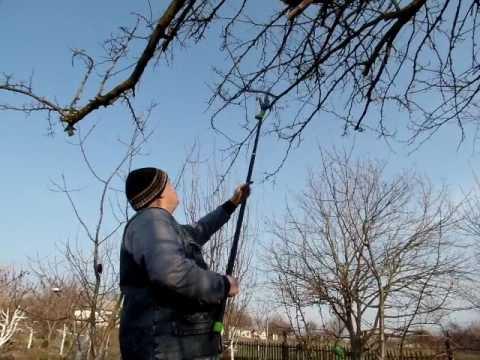 Вопрос: Если нет секатора и ножовки , чем можно провести обрезку в саду?