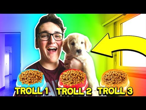 CUTE PUPPY decides what TROLL happens TO A MINECRAFT PLAYER!