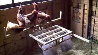 Chicken Controlled Door Opener