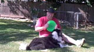 Dog Training Tips - Learning to play frisbee, or Disc Dog, with Maxx the border collie