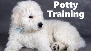 How To Potty Train A Komondor Puppy - Komondor House Training Tips - Housebreaking Komondor Puppies