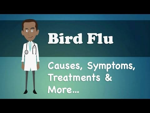 Bird Flu - Causes, Symptoms, Treatments & More…
