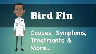 Bird Flu - Causes, Symptoms, Treatments & More…
