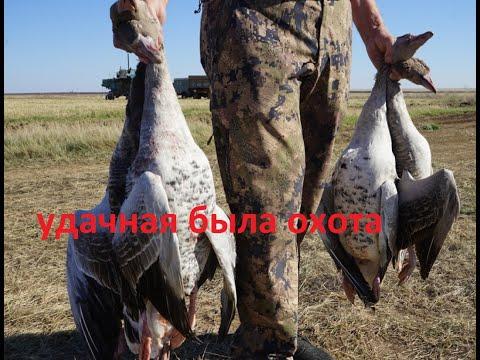 охота на гуся 2019-УДАЧНАЯ!!! но трудовая