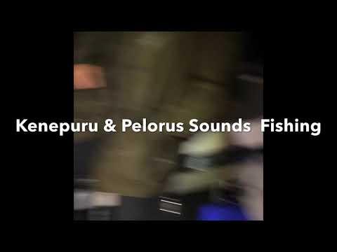 Kenepuru & Pelorus Sounds Fishing March 2020