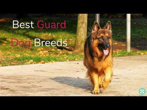 10 Breeds That Make The Best Guard Dogs!
