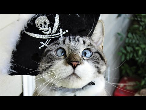 Thumbnail for Cat Video Pirates of the Caribbean (cover by Squeal Cat)