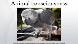 Animal consciousness