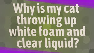 Why is my cat throwing up white foam and clear liquid?