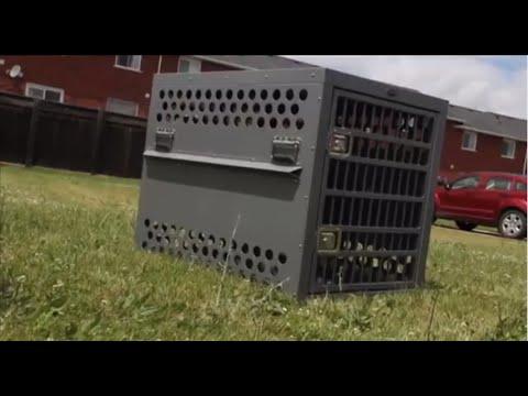 zinger aluminum dog crates