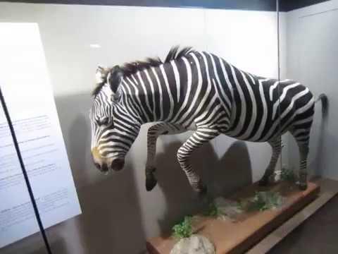 Predadores no South African Museum