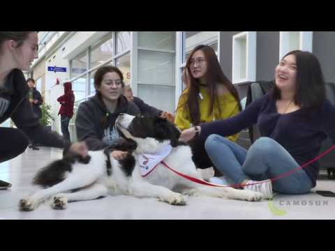 Therapy dogs help Camosun College students