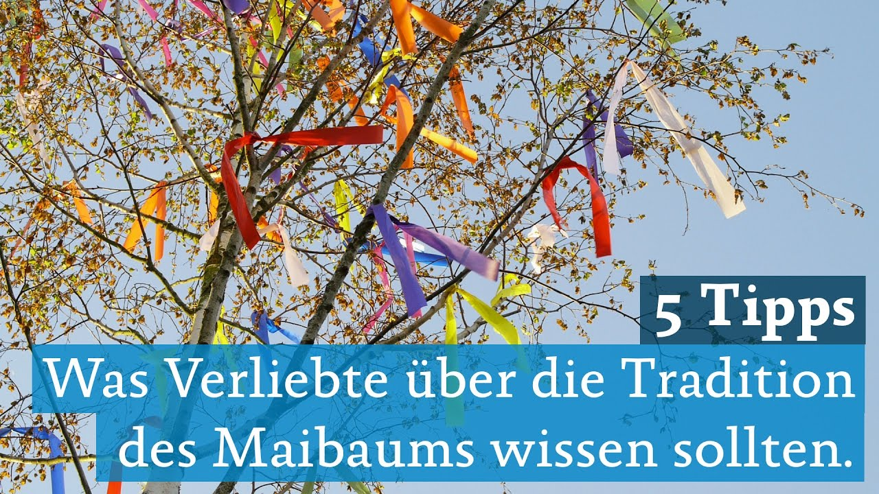 Maibaum Köln