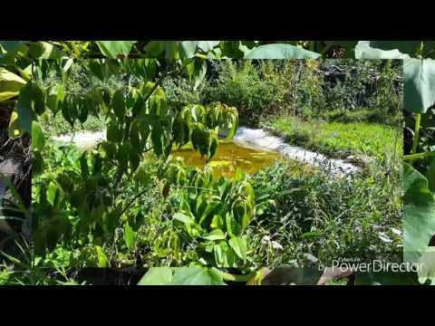 Hortus  Felix Der Glückliche Garten Stellt Sich Vor