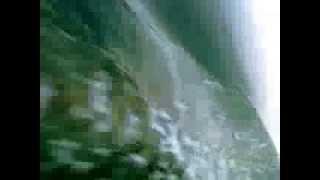 Steller Sea Lion Transiting