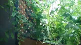 Aquaponics Update Diy Greenhouse Vegetable Garden Home Built 2