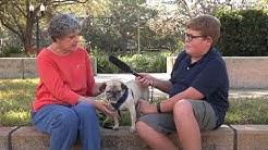 Pick This Pet - Blake at Pug Rescue of Florida