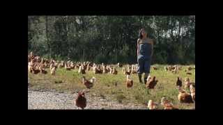 Rabbit River Farm & Organic Eggs