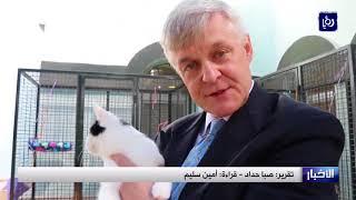 تعيين قط أردني كبير صائدي الفئران في السفارة البريطانية - (1-11-2017)