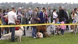 У Сумах пройшла традиційна Всеукраїнська та міжнародна виставка собак