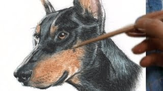 How to Draw Doberman Realism with Pastel Pencils (粵) 葉浪點畫粉彩