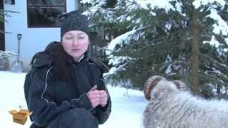 Мимимимини-барашки. Что вы точно захотите узнать про карликовых овец!