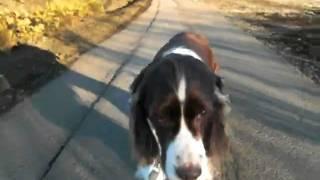 パディ14さいになりました。まだまだお散歩大好きです!歩く距離は短く...