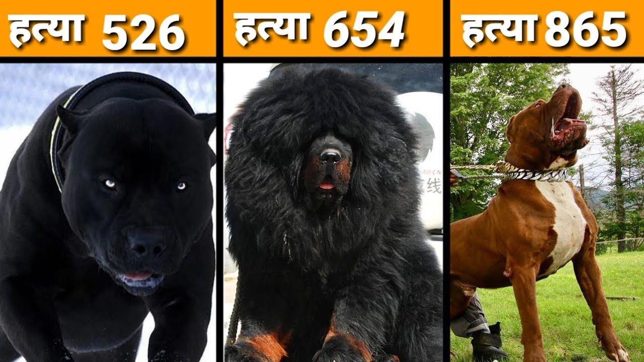 Most Dangerous Dogs Breeds In The World