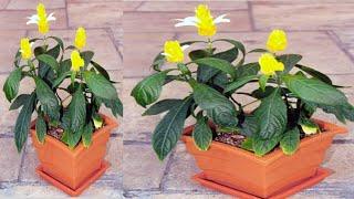 A Planta mais Exótica Para sua Casa – Incrível