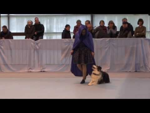 Béa et Lagoon 1er concours FUN Dog Dancing OBR 12/03/2017