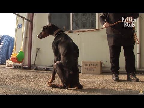 Dog Keeps Losing Weight Despite Eating | Animal in Crisis EP5