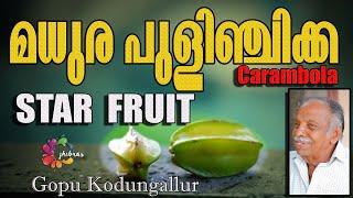 മധുര പുളിഞ്ചിക്ക || STAR FRUIT || Carambola Tree || Gopu kodungallur |#star fruit #gopu #kodungallur