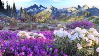♪♫Flowers of the Forest ~ Mike Oldfield