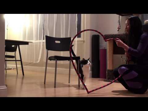 Puppy's Circus Cat Tricks