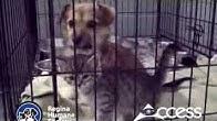 Regina Humane Society - YouTube