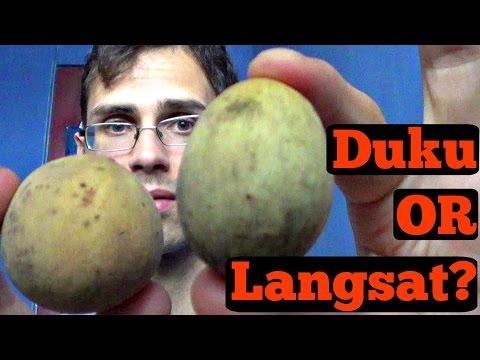 Duku and Langsat Review (Lansium parasiticum) - Weird Fruit Explorer Ep 147