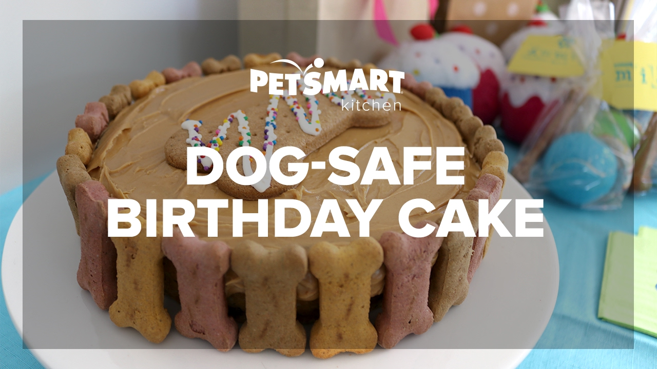 PetSmart Kitchen: Doggie Birthday Cake