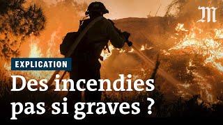 Les incendies sont-ils si graves pour les forêts ?