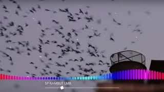 SP Rambut Lmb By Amar Maruf exported ( Suara Panggil Walet Terbaru )