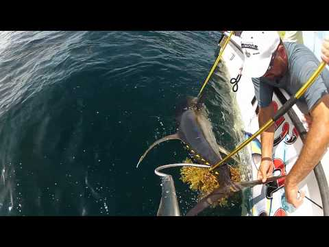 OFFSHORE FISHING..Faux Pas Rodeo 2012, Venice, LA  HD 1080i