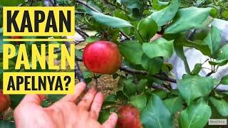asmr fruits