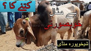 Sheikhupura Mandi ka KHUBSOORAT TAREEN JANWAR ! Rates of Bakra Eid 2018 Behtareen Mandi