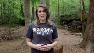 KitVinsick BlackbirdFilmFest Intro H264