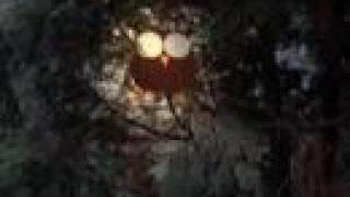 The owl moans low (Lonely Drifter Karen)