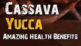 Cassava Yucca Health Benefits - Cassava Vegetable Health Benefits - Health Benefits of Yucca
