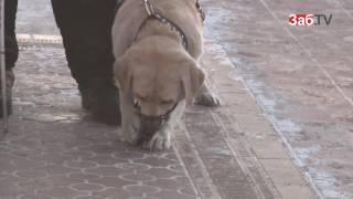 Слепой читинец, снятый с поезда из-за собаки-поводыря, выиграл суд