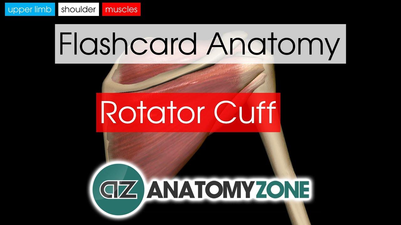 Rotator Cuff Flashcard Anatomy Youtube